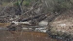 Foam closeup, 16:42:02,, River near RR 30.8626557, -83.3222330