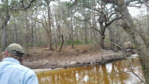 Movie: Upstream and down (15M),, Withlacoochee River 30.8623900, -83.3224500