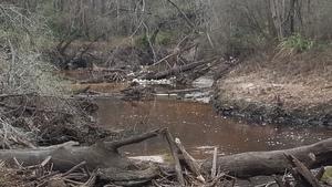 Deadfalls and foam, 16:41:59,, River near RR 30.8626557, -83.3222330