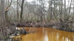 Blackwater river winter, 16:26:55,, Tea-colored water 30.8620271, -83.3225940