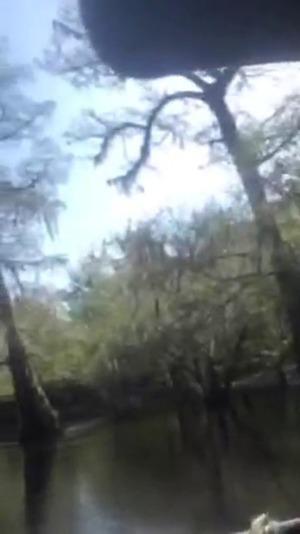 Trees, Stills