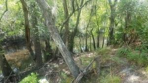 Downstream trail, 2018:05:16 11:17:37,, River in WMA 30.9268600, -83.0402300