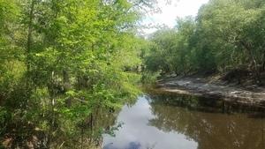 Upstream curve, 2018:05:16 11:17:40,, River in WMA 30.9267849, -83.0403718