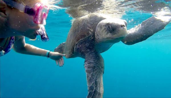 Turtle, Stills