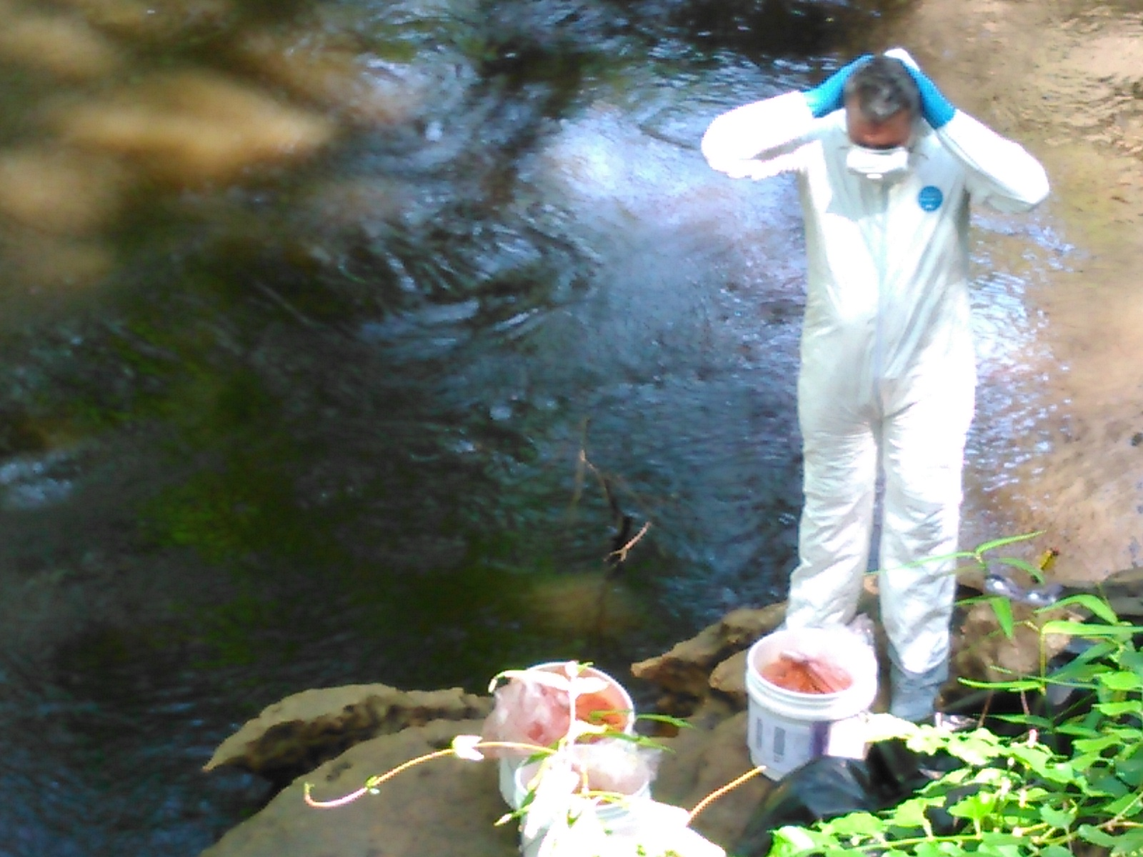 1600x1200 Suiting up, Thomas Greenhalgh, in Alapaha Dye Test, by John S. Quarterman, for WWALS.net, 22 June 2016