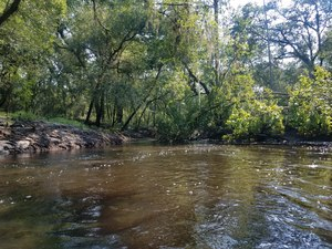 Deadfall ready to block entire river, Oxbow cutoff