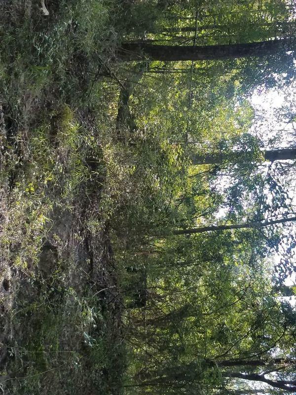 Trees, Downstream