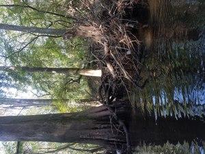 Beavers?, River