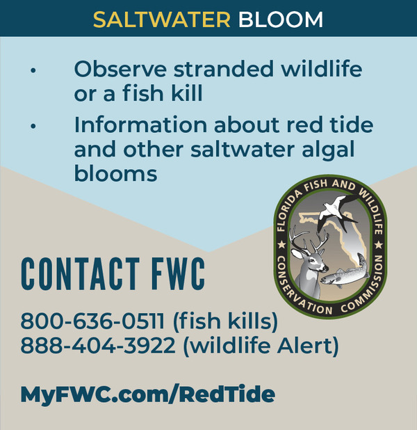 FWC (Saltwater Bloom), Contact: