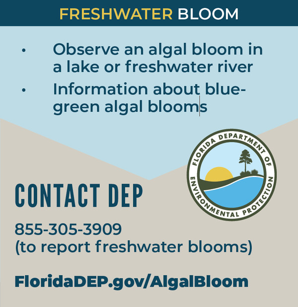 DEP (Freshwater Bloom), Contact: